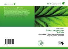 Bookcover of Tabernaemontana Citrifolia
