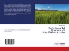Bookcover of The System of Tef (Eragrostis tef) Intensification: a review
