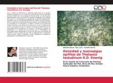 Buchcover von Densidad y macroalgas epífitas de Thalassia testudinum K.D. Koenig