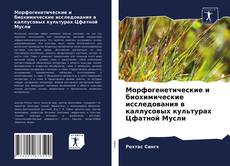 Морфогенетические и биохимические исследования в каллусовых культурах Цфатной Мусли的封面