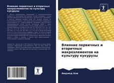 Bookcover of Влияние первичных и вторичных макроэлементов на культуру кукурузы