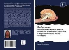 Bookcover of Изображение периферического зрения и спинного зрительного потока в коре головного мозга человека