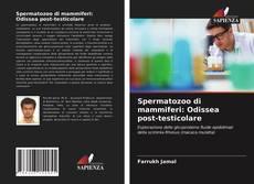 Bookcover of Spermatozoo di mammiferi: Odissea post-testicolare