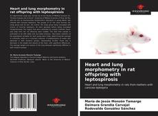 Copertina di Heart and lung morphometry in rat offspring with leptospirosis