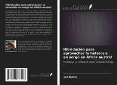 Bookcover of Hibridación para aprovechar la heterosis en sorgo en África austral