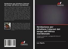 Bookcover of Ibridazione per sfruttare l'eterosi del sorgo nell'Africa meridionale