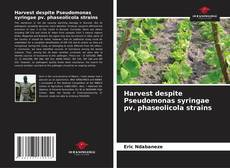Bookcover of Harvest despite Pseudomonas syringae pv. phaseolicola strains