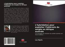 Bookcover of L'hybridation pour exploiter l'hétérosis du sorgho en Afrique australe