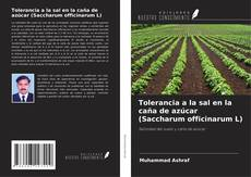 Bookcover of Tolerancia a la sal en la caña de azúcar (Saccharum officinarum L)