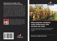 Bookcover of Allevamento studiato sulla tolleranza alla siccità nel mais