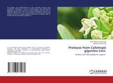 Bookcover of Protease from Calotropis gigantea Linn.
