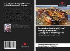 Borítókép a  Reproductive biology of Menippe frontalis (Decapoda, Brachyura) - hoz