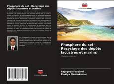 Buchcover von Phosphore du sol - Recyclage des dépôts lacustres et marins